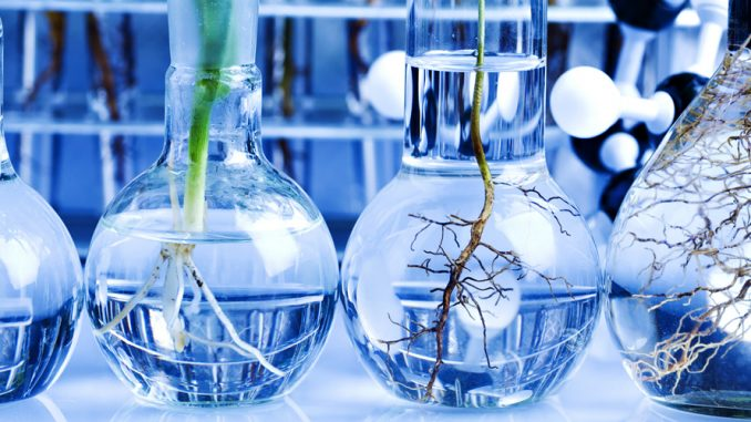 เทคโนโลยีชีวภาพพืช