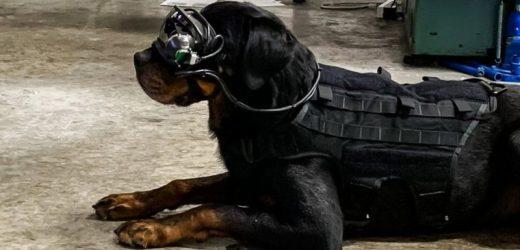 สหรัฐอเมริกาทดลอง แว่นตาเสมือนจริง สำหรับสุนัขทหาร ที่สามารถรับคำสั่งระยะไกลได้