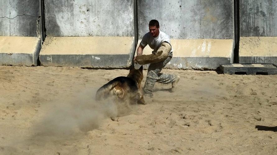 แว่นตาเสมือนจริง สำหรับสุนัขทหาร