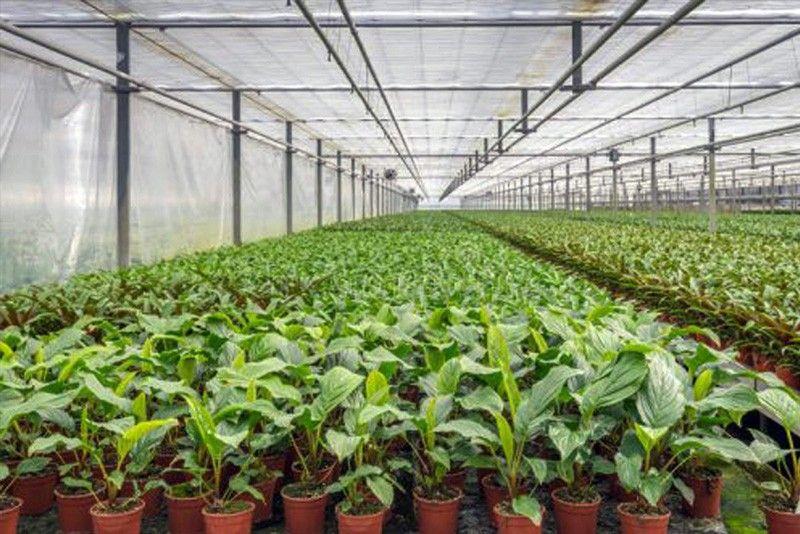 เทคโนโลยี IoT กับการเกษต- Smart Greenhouses